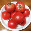 熟れ熟れの完熟トマト