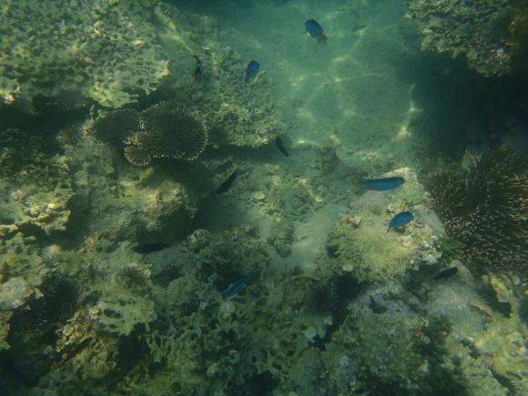 珊瑚と青い魚たち