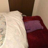 Sunの寝床の画像