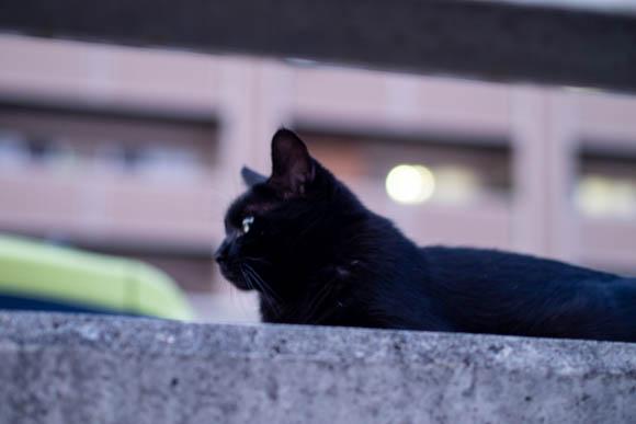 逃げられずにうまく撮れた猫の写真。