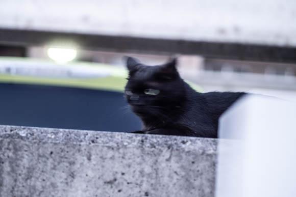 撮っている途中で逃げられた猫の写真。