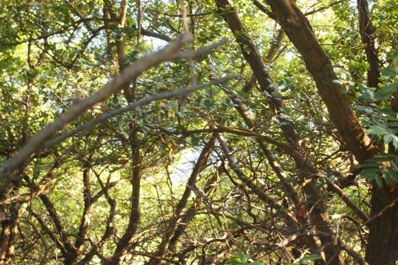 木が生い茂る海辺の崖の写真。