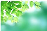 さわやかな緑の風景