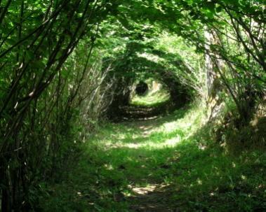 木々でできたトンネルの画像