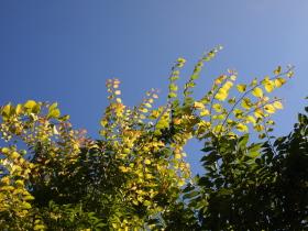 真夏のとても暑かった日の空の写真。