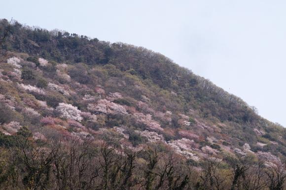 色とりどりに染まる春の山の写真