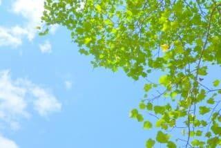 青空と緑の樹木の画像