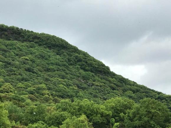 久々のまとまった雨で嬉しそうに見える山の写真