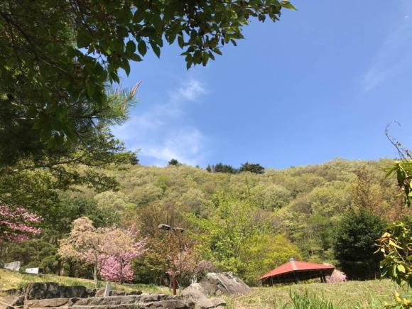 標高が低い所ではほとんど散ってしまった桜の花まだ見られる翠波高原の写真